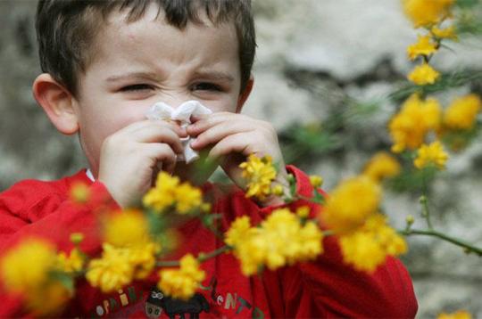 La rhinite allergique